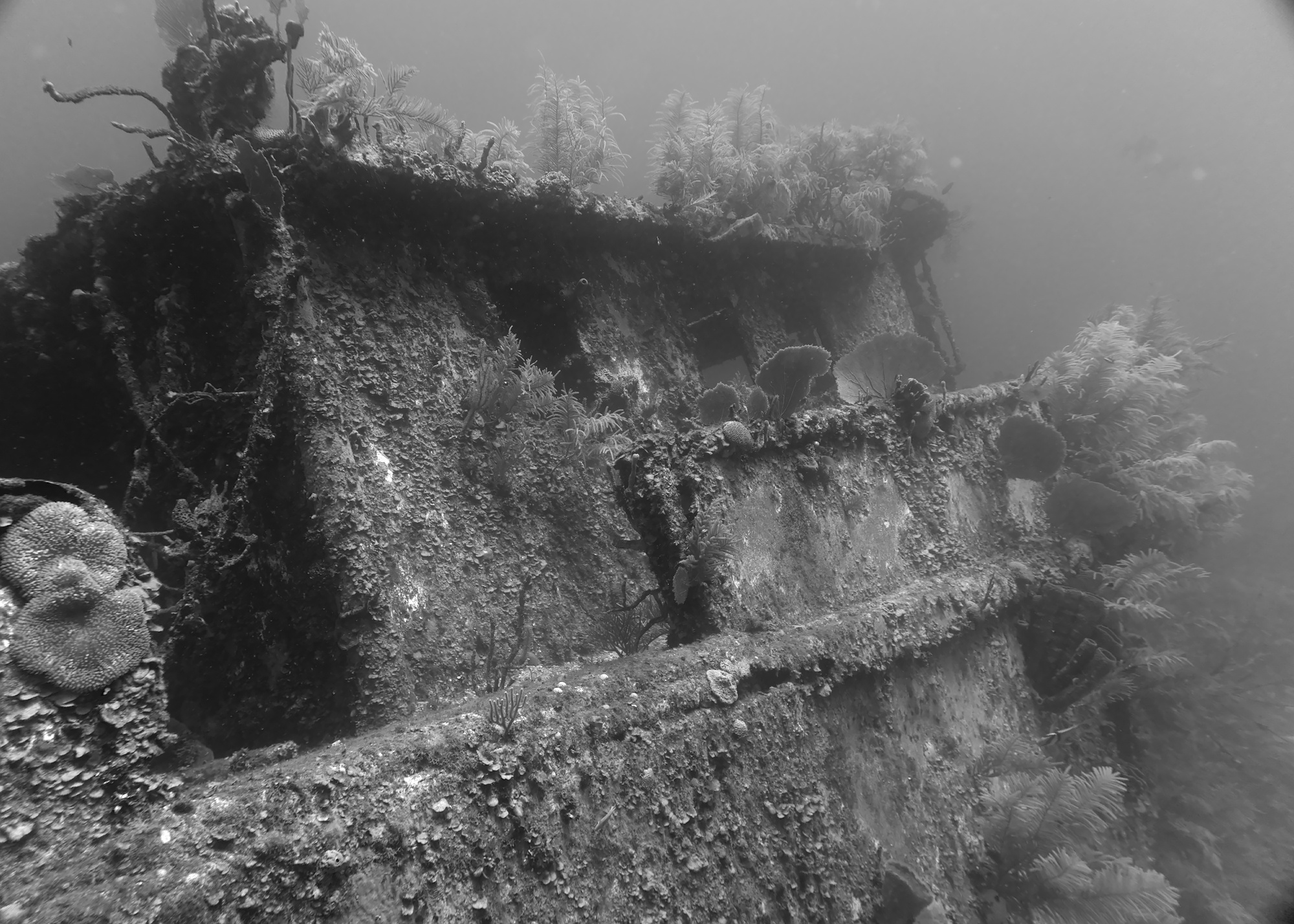 Mr Bud Shipwreck