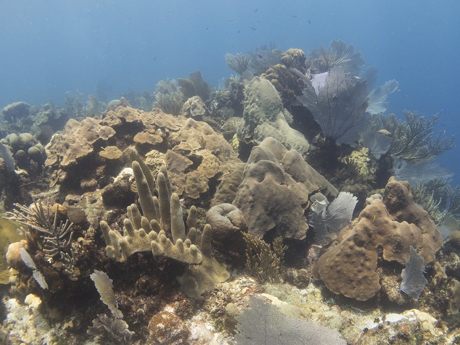 Healthy coral reef at Mary's Place