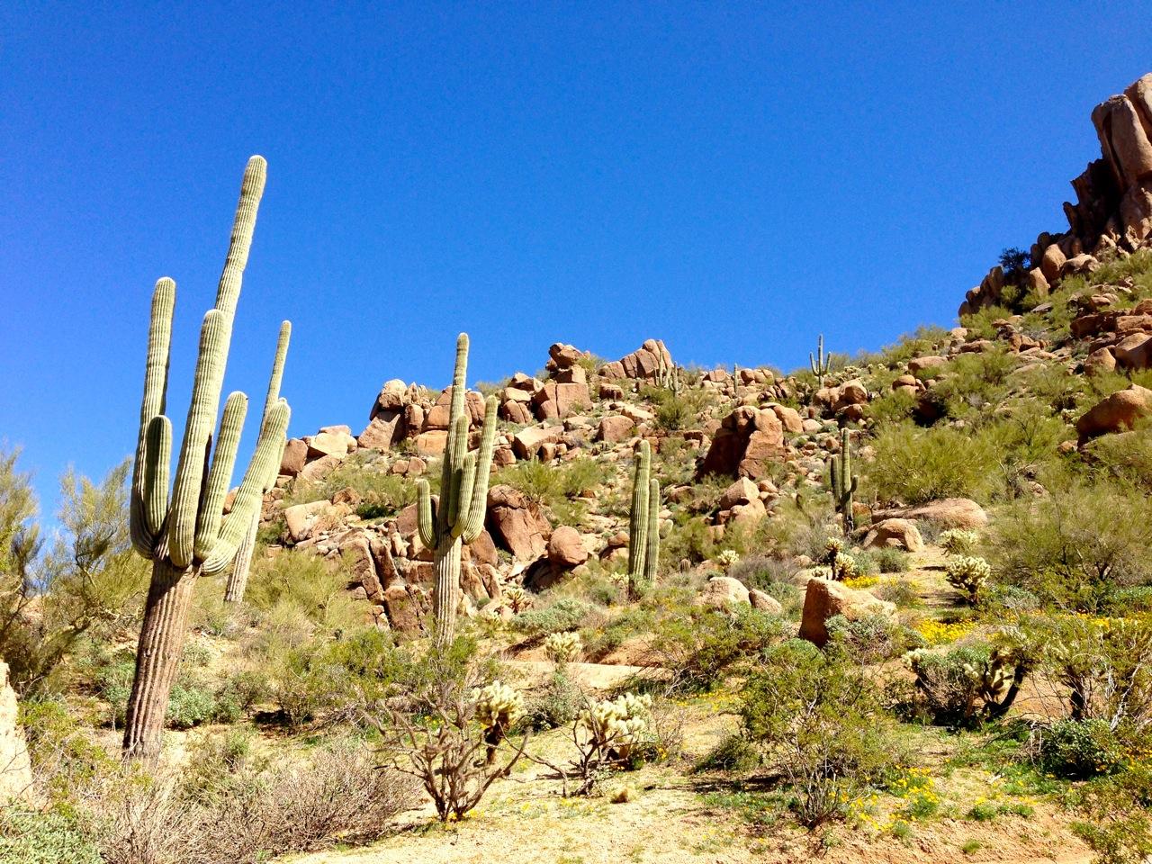 A cactus garden!