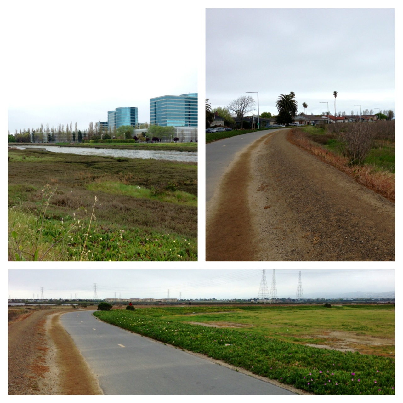 View of the marshes in Foster City