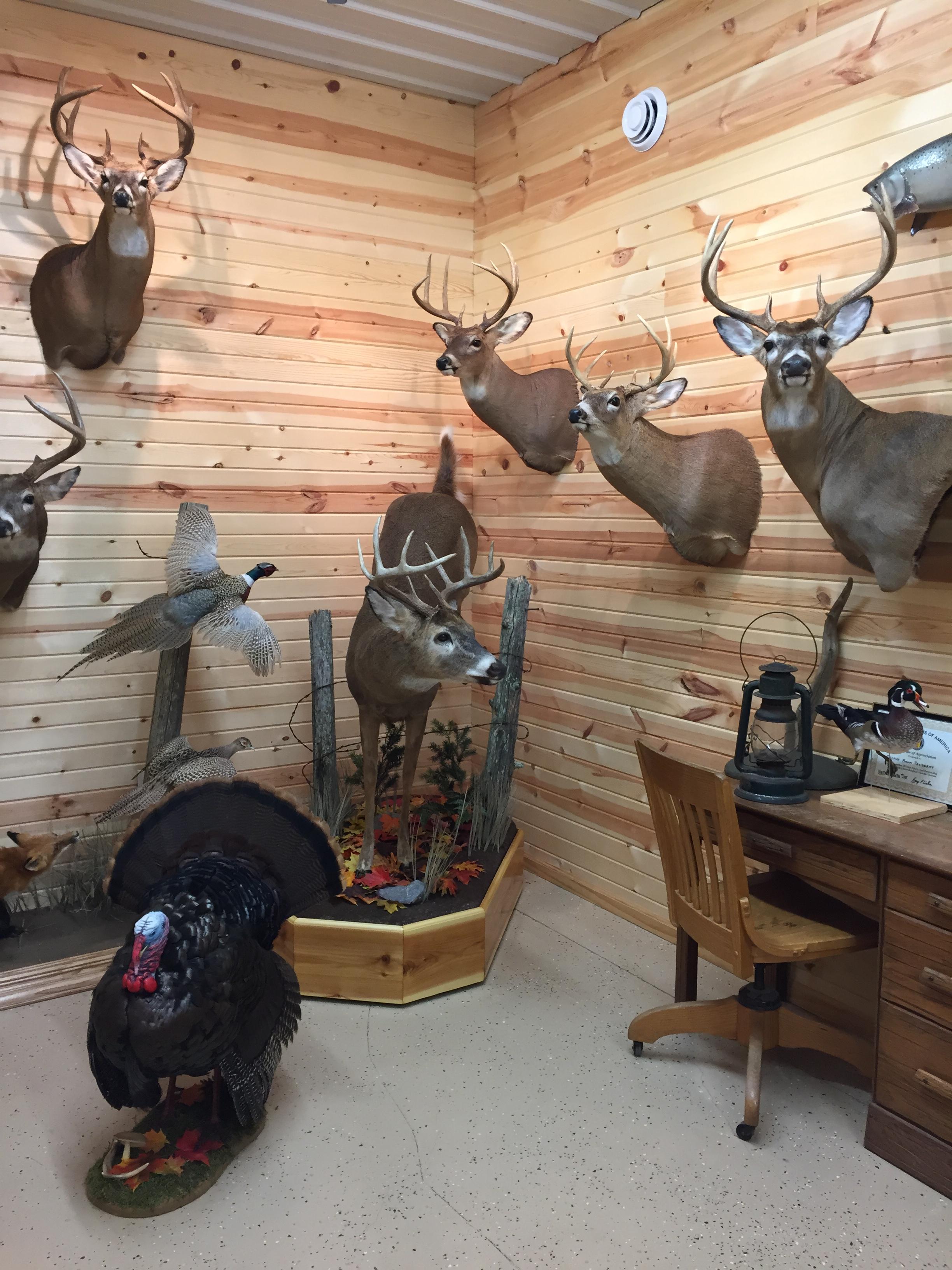 Whitetail-Deer-11.JPG