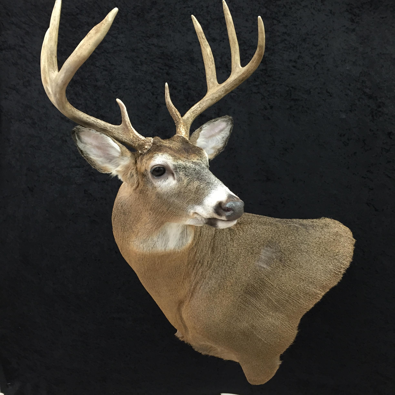 Whitetail-Deer-5.JPG