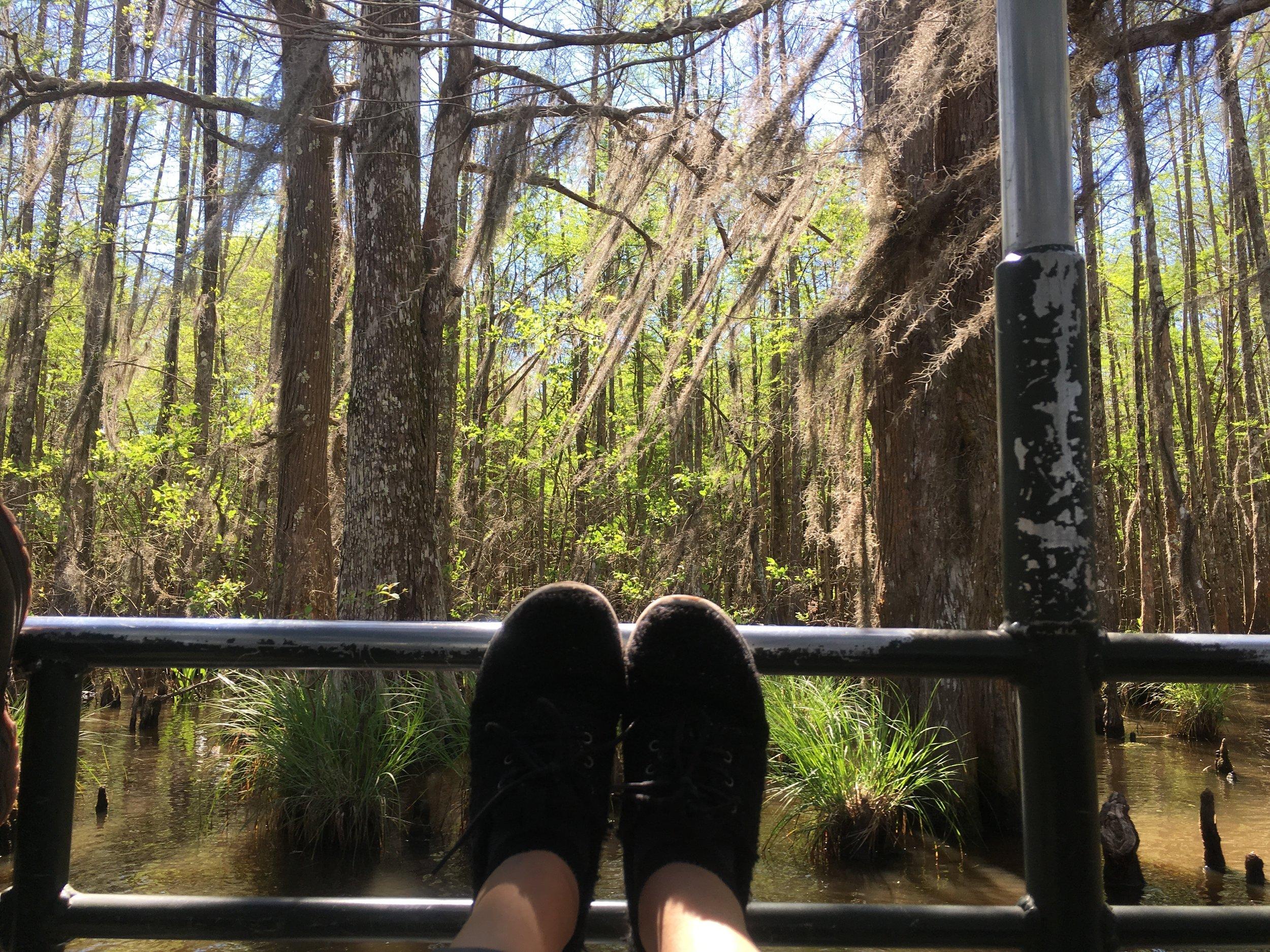 swamp Louissana.jpg