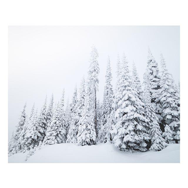 Snow caked & teal skies Photos for @sunpeaksresort #sunpeaks360 #explorebc #ad