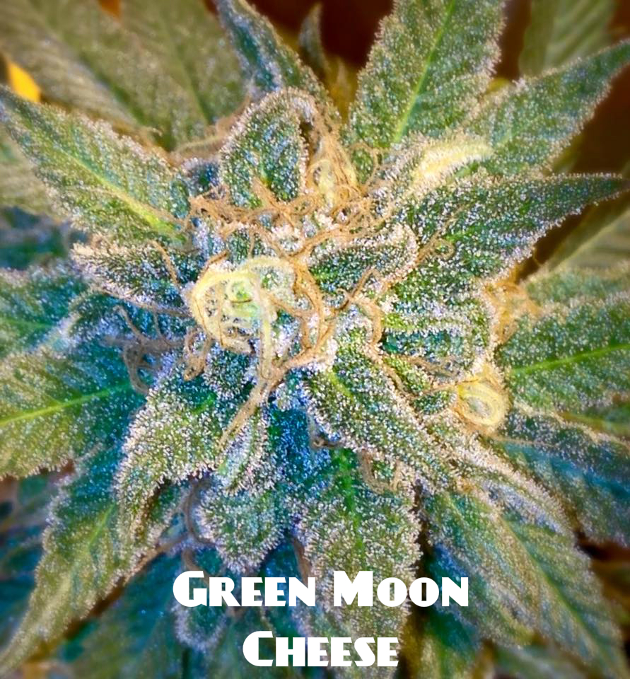 green moon cheese in flower labeled.jpg
