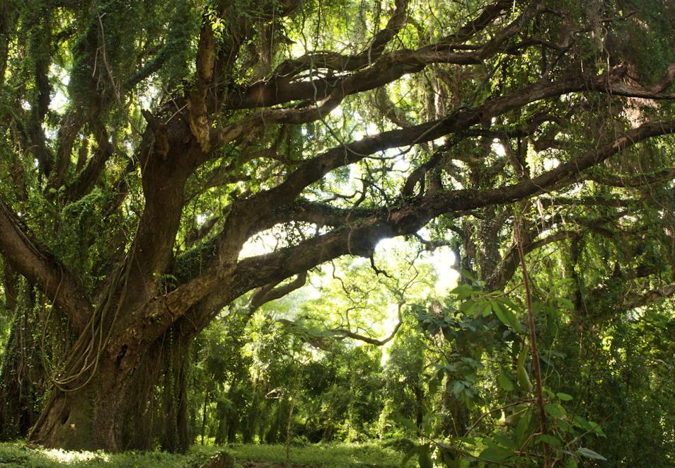 Treepanorama