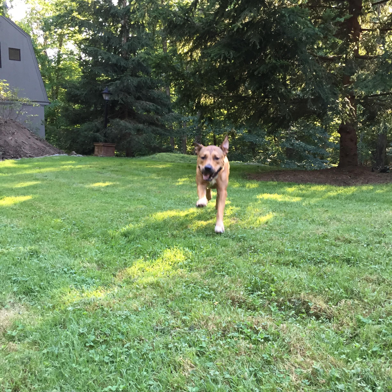 Playing fetch.