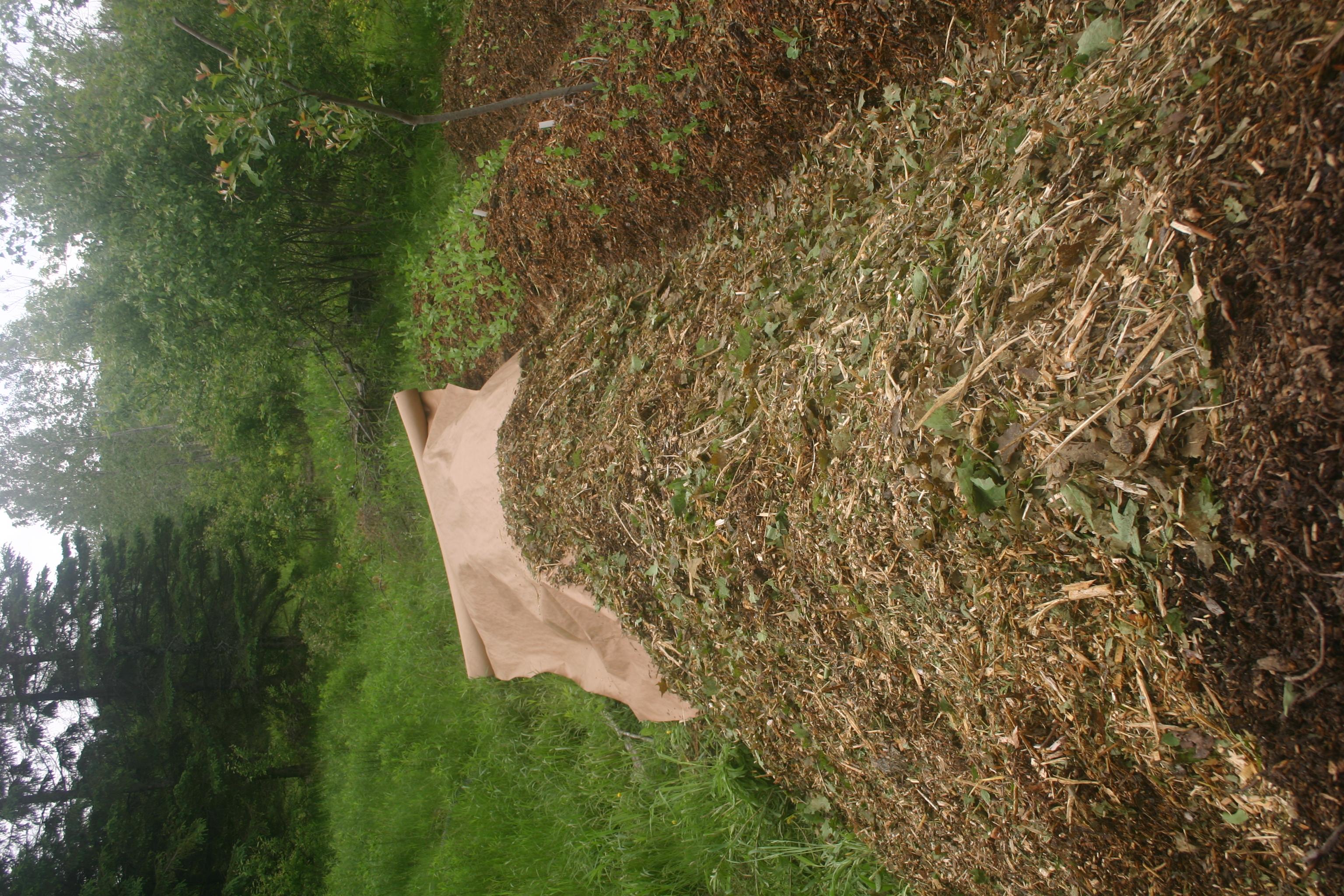 Planter en ajoutant dans chaque trou de plantation une poignée de compost vivant