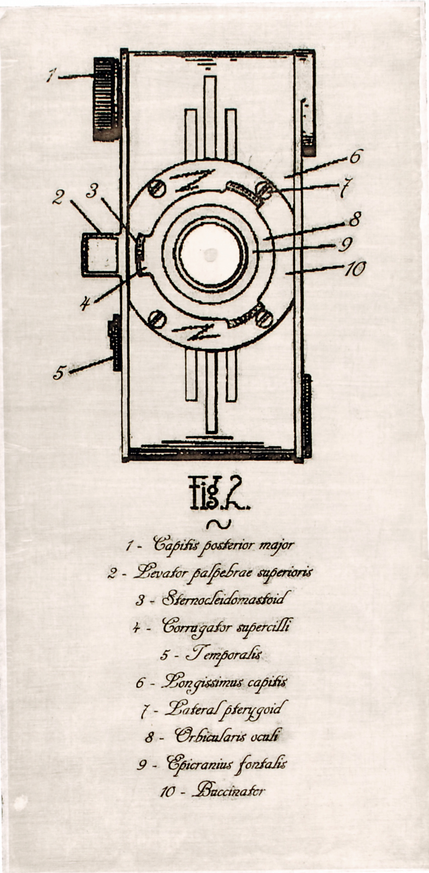 patent   chine-colle intaglio on rag paper  edition of 7  2011