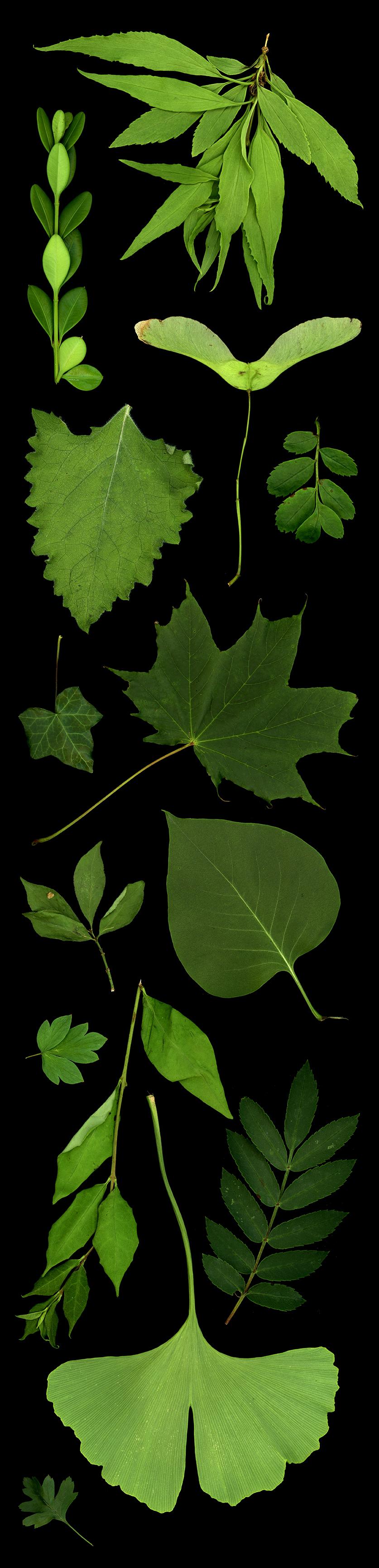 leaf_panel_2.jpg
