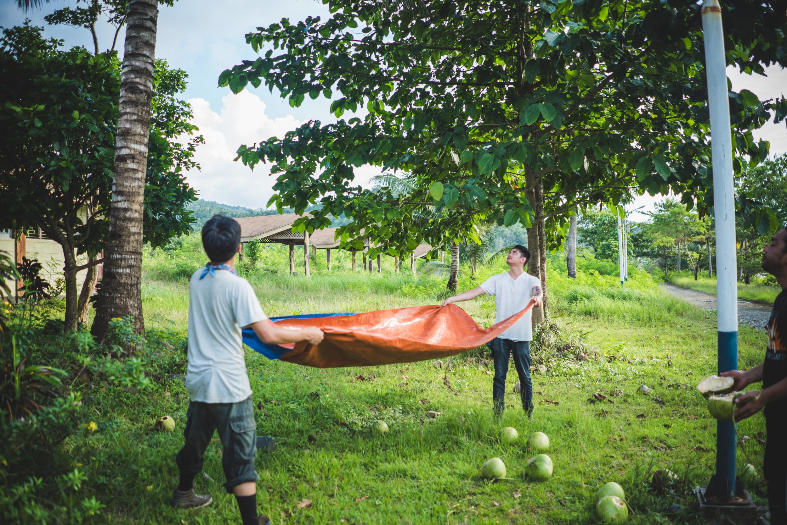 We used a tarp to catch coconuts while Ramon effortlessly climbed the tree.