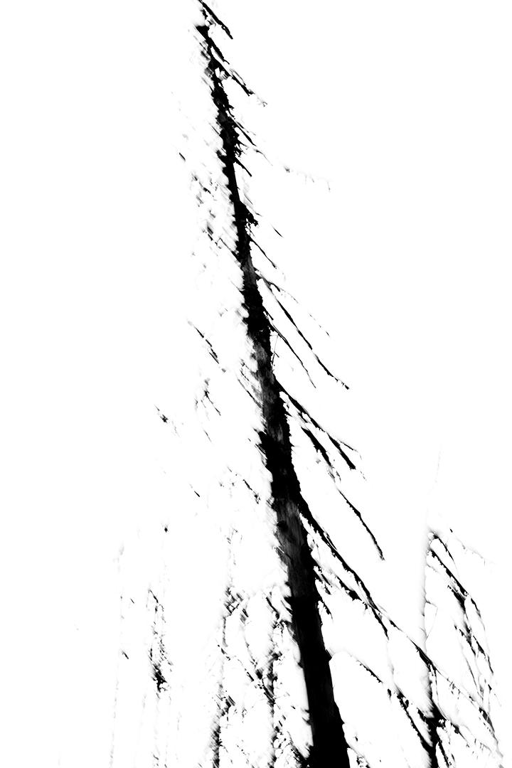 a-TreeTestTwo637A4941.jpg