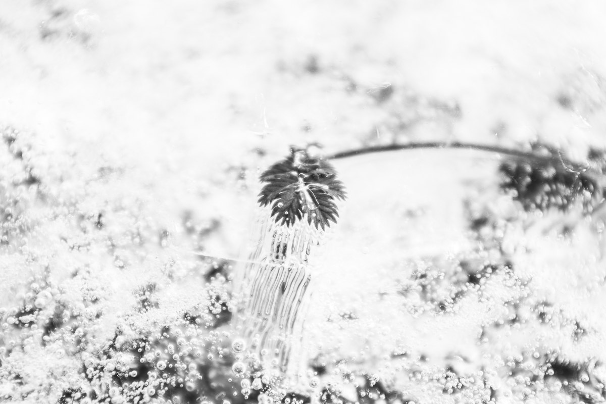Ice_White_14.JPG