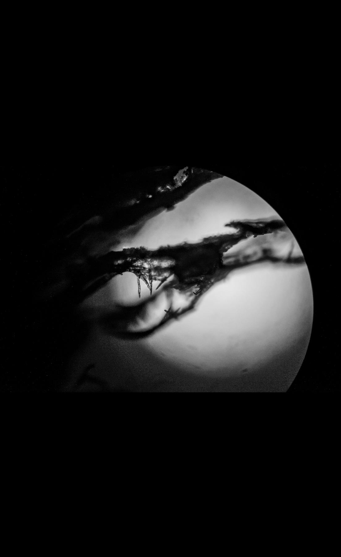 Organisms03.jpg