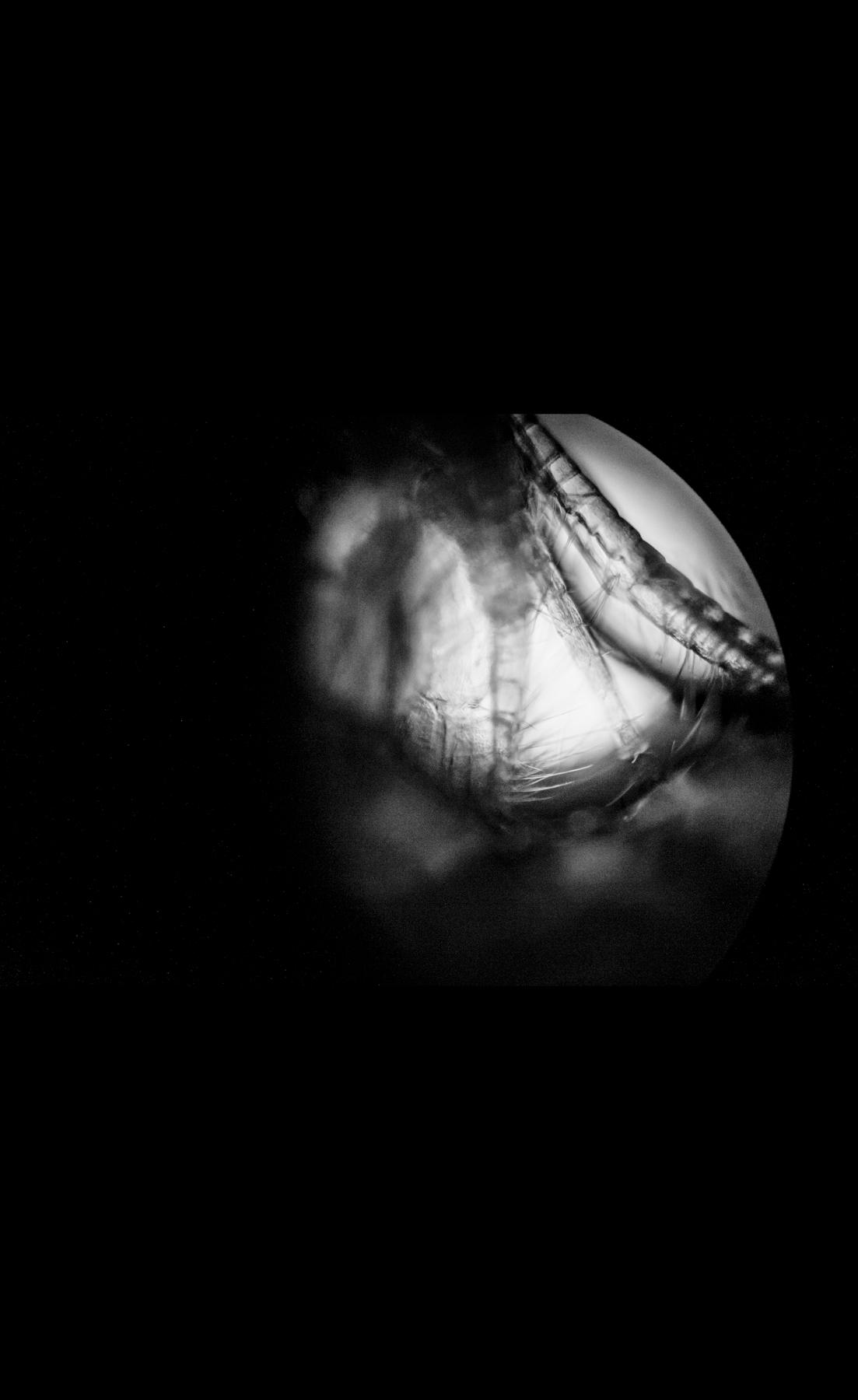 Organisms08.jpg