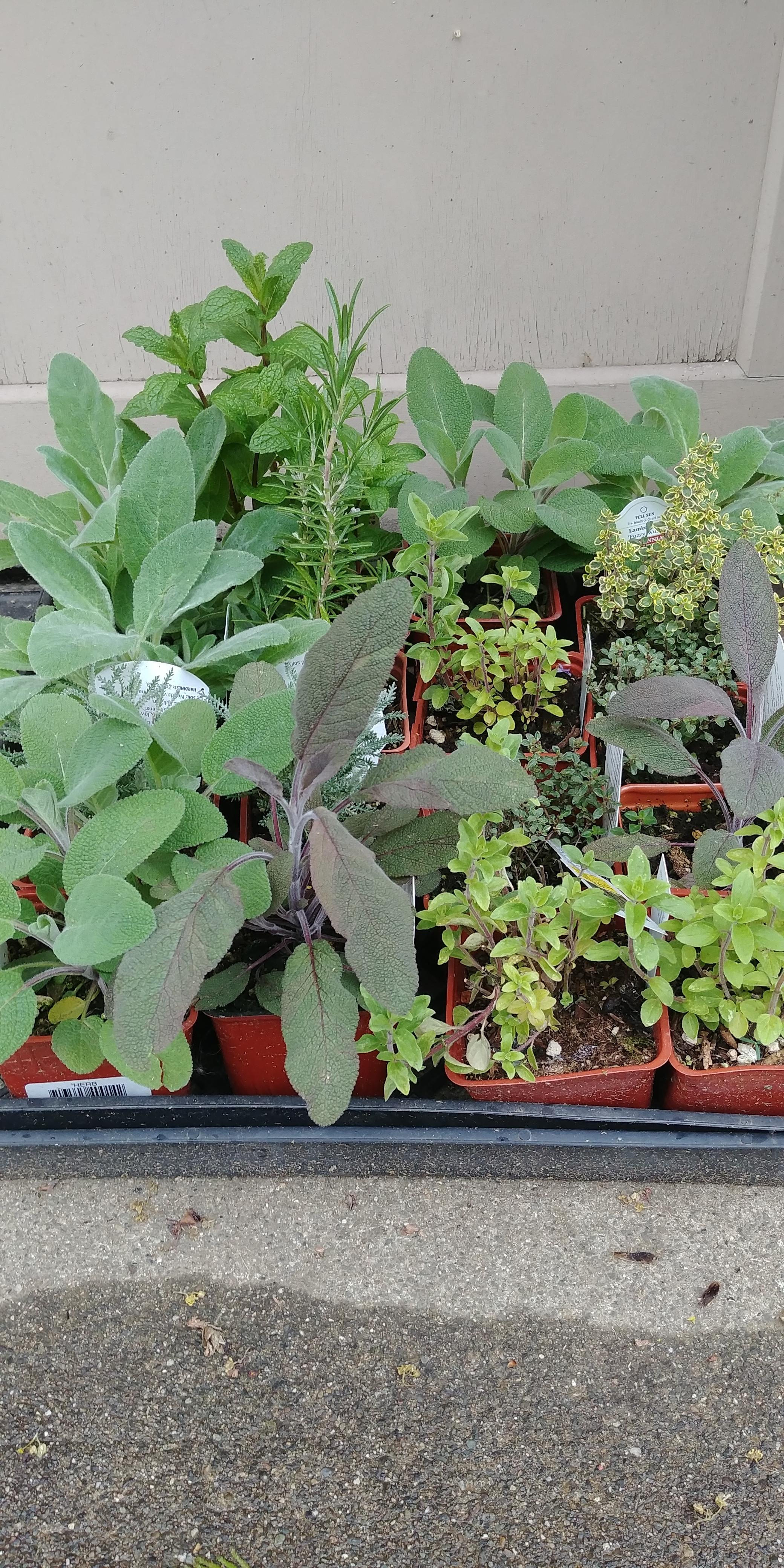herb flat