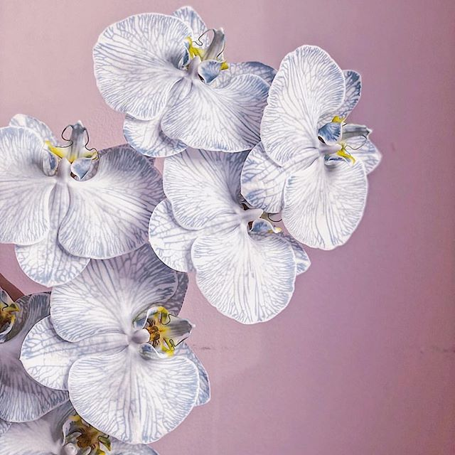 Aloha Friday: orchid power (Repost c/o: @__flowerwitch)