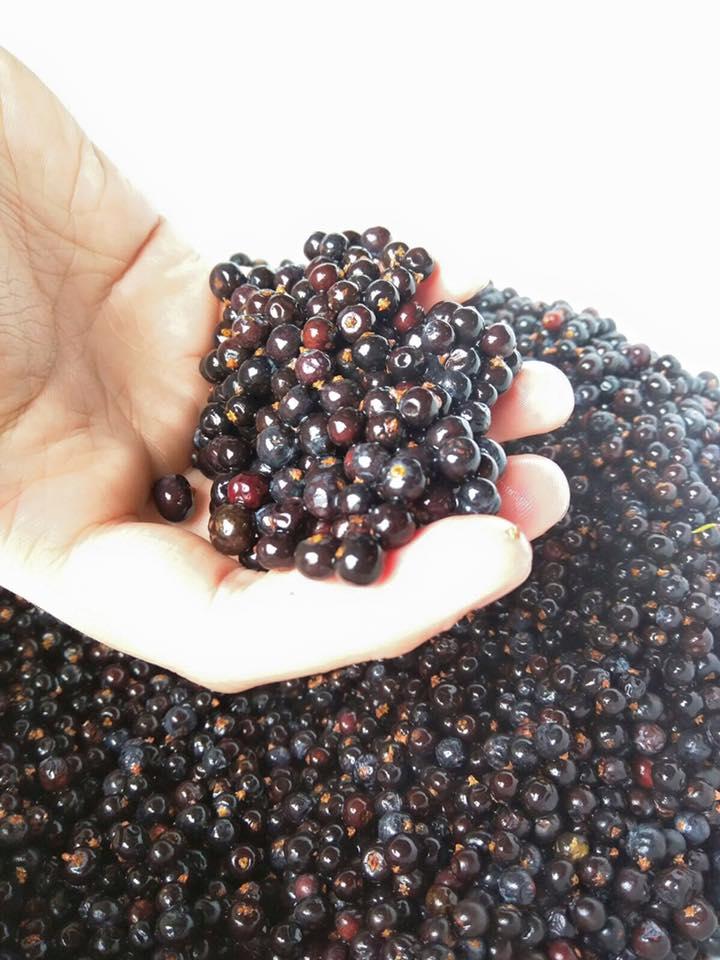 Juniper Berries.jpg