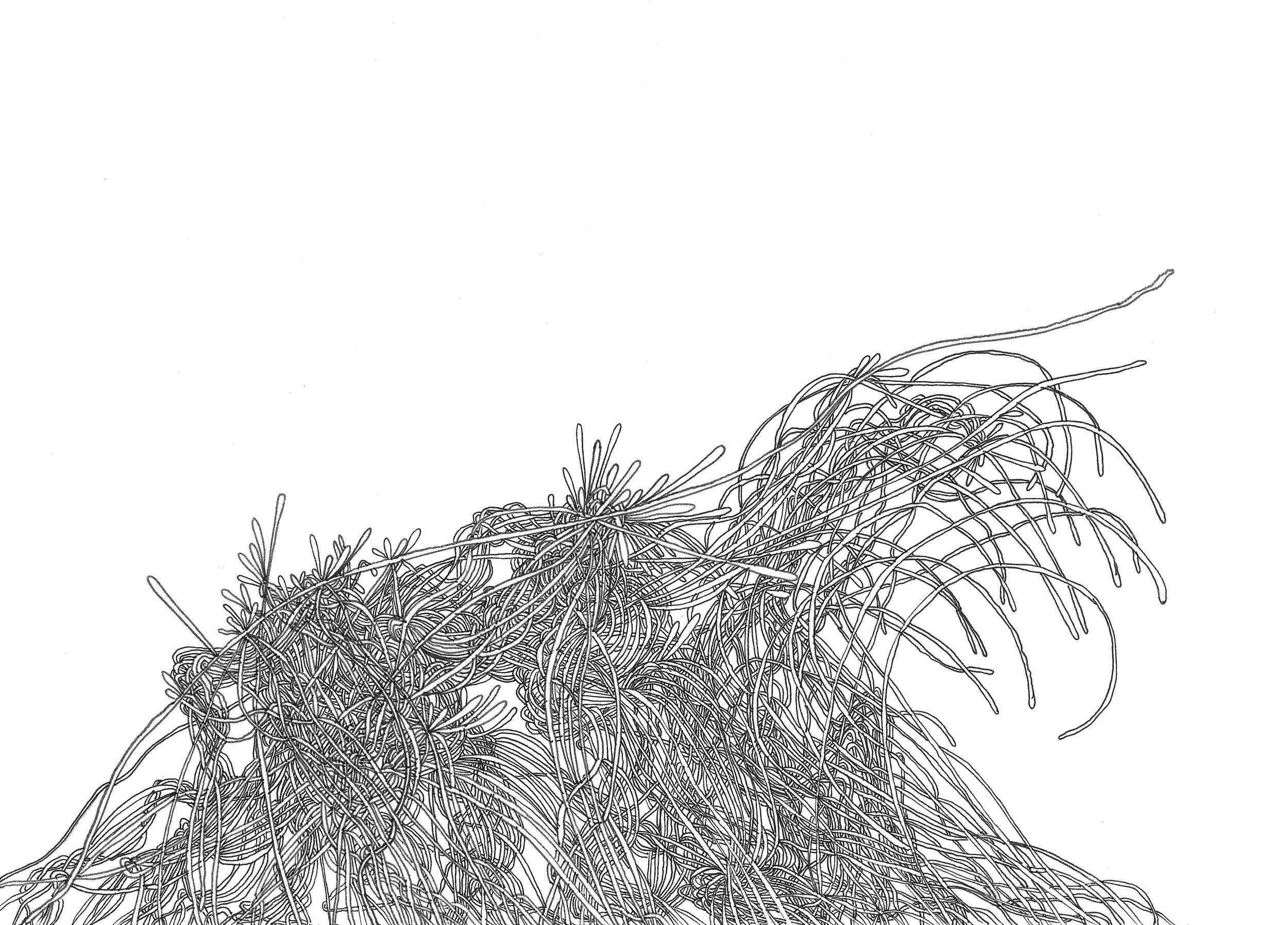 Traveler  (2013)  Acid Free Pen and Paper 5 in x 7 in 8 in x 10 in