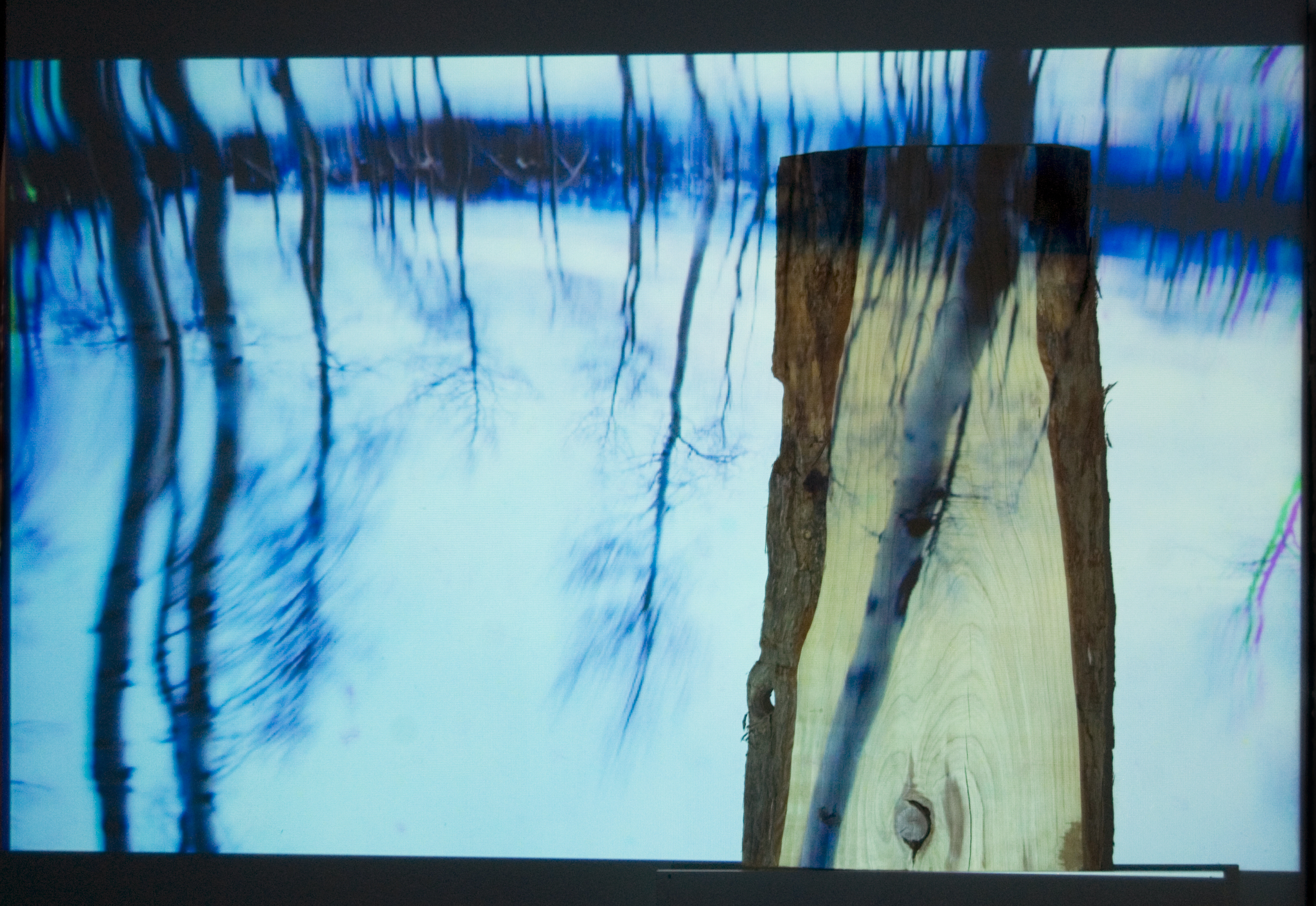 A Red Wood Among The Aspens  (2015)  Video Projection on Live Edge Redwood Slab 6.5 ft x 5 ft   VIDEO