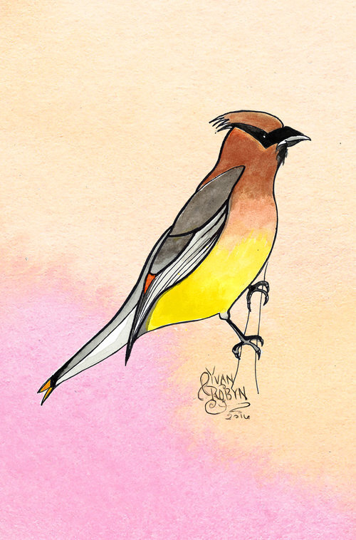 Cedar Waxwing Totem Animal  | Custom illustration for Yvan & Robyn's wedding | 2016