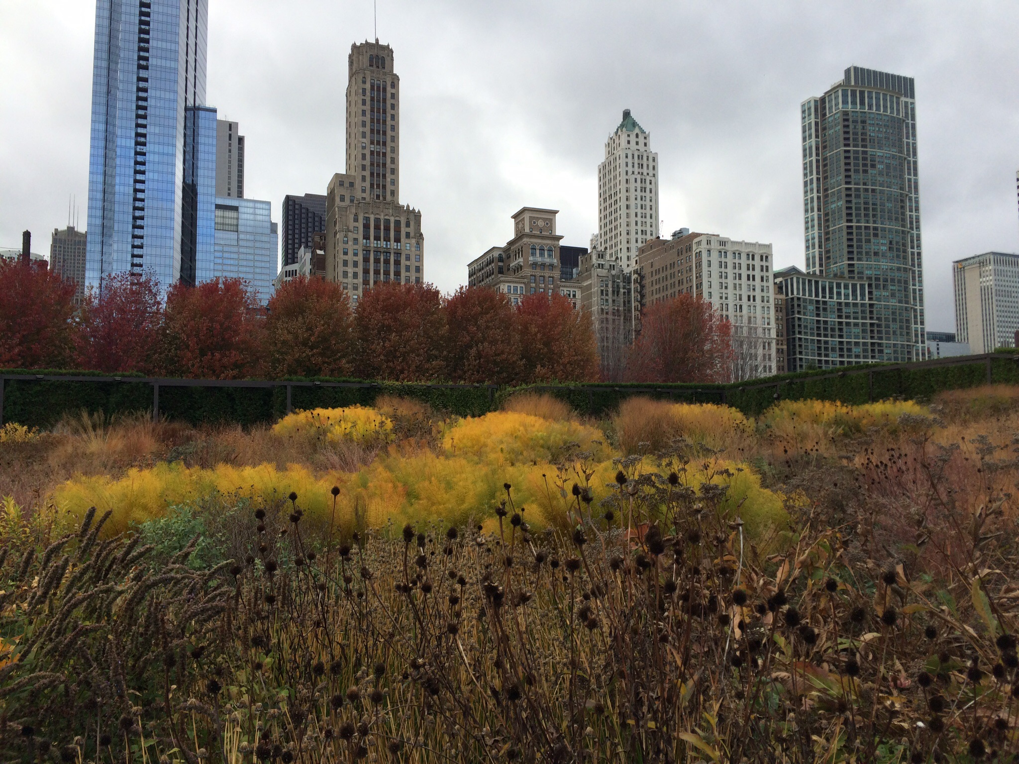 Chicago in the Fall has the most beautiful color palette.