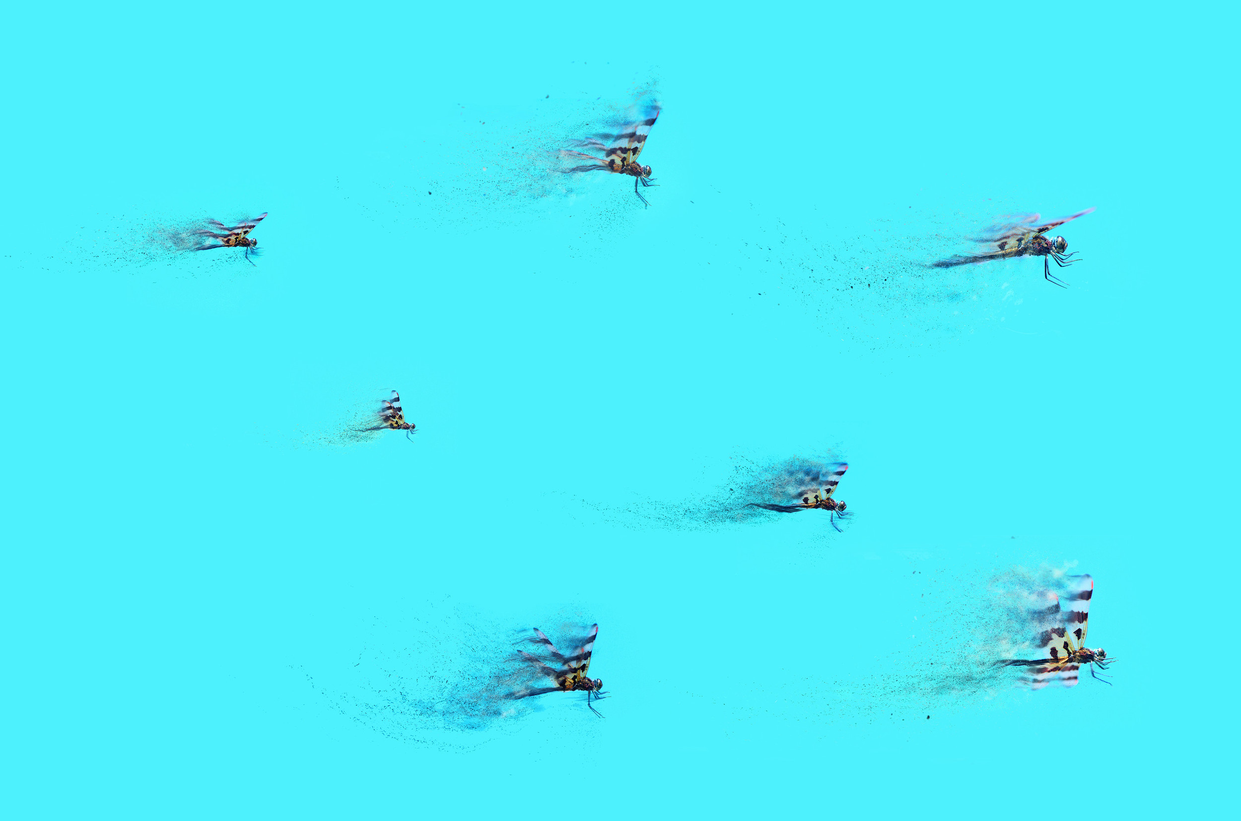 """'Odonata leader to drag squadron, tighten up formation and keep your eyes peeled for bogeys' Digital Photography on Aluminum, 48"""" x 28"""" $795"""