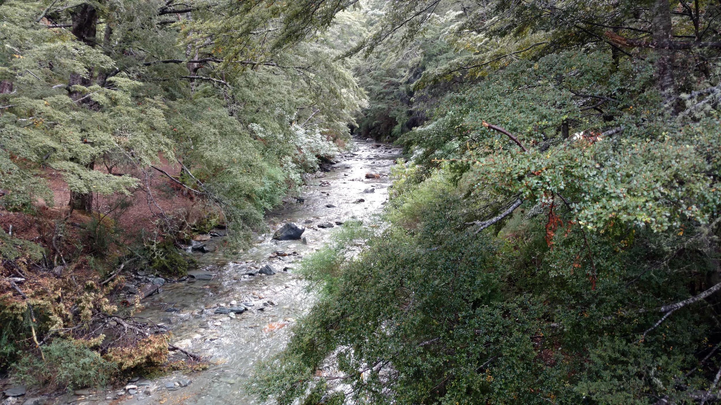 Trail view of canyon creek