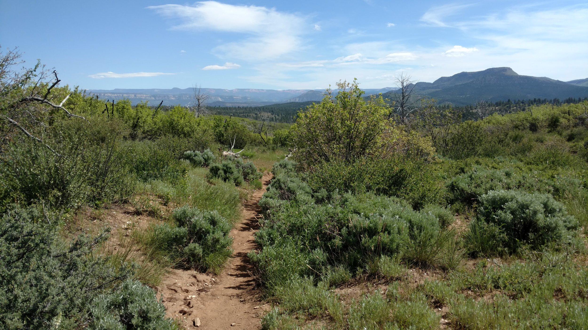 Deertrap Mountain trail view
