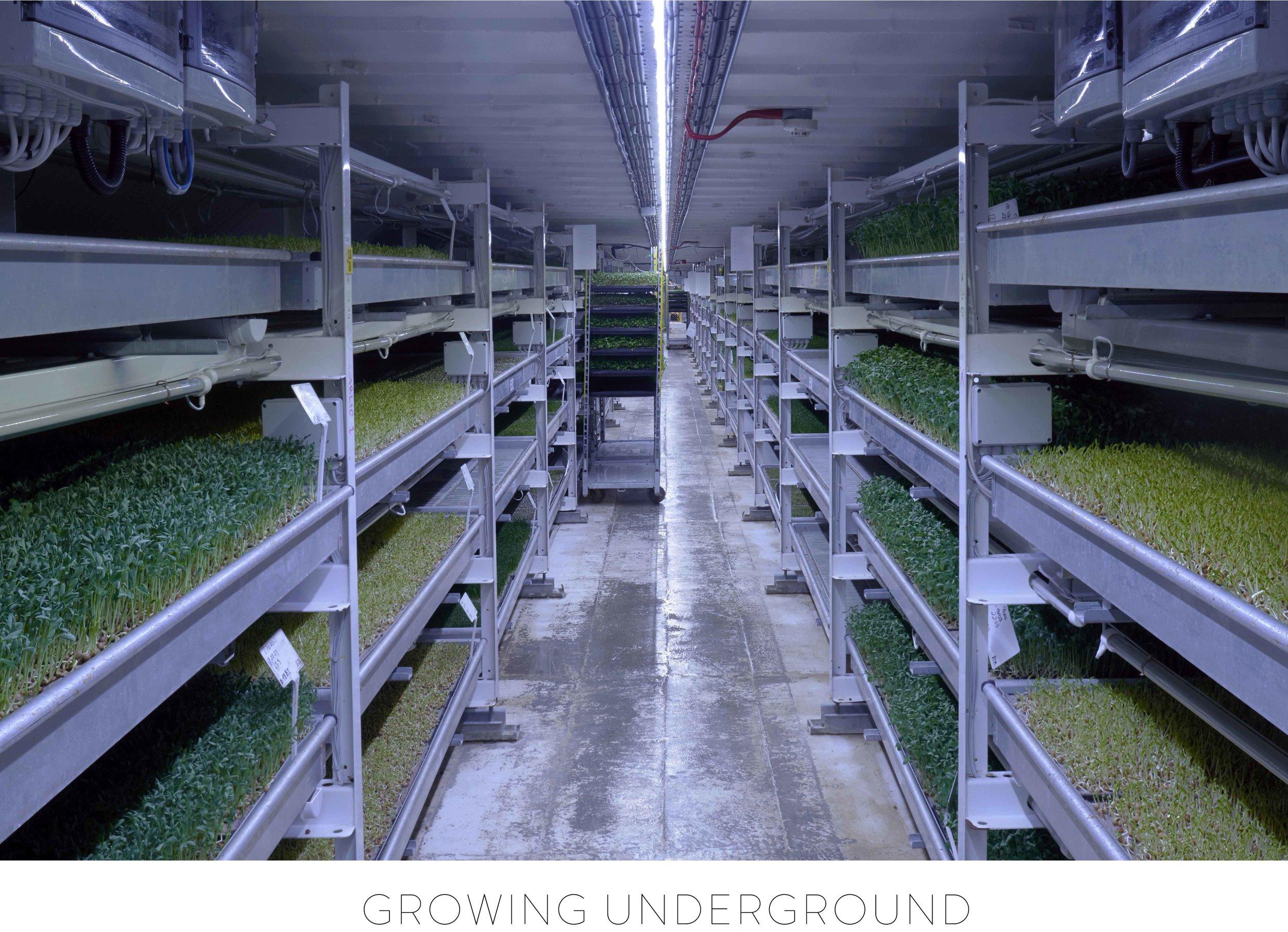 JAMESPARKER_Growing_Underground_002_Text.jpg