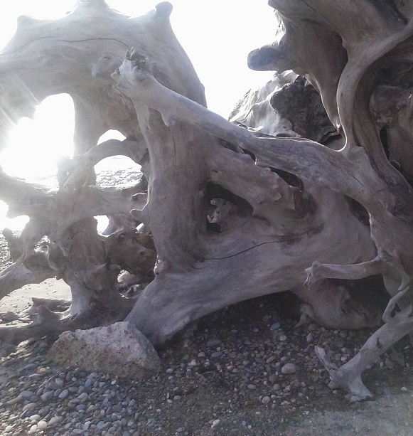 driftwoodsmall.jpg