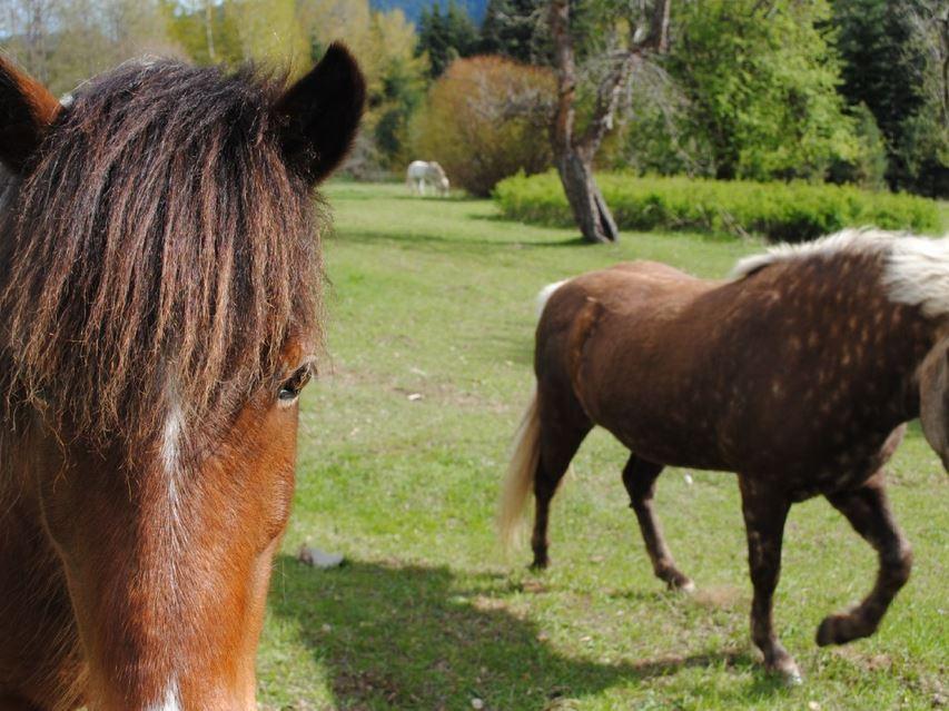 Friendly Ponies.JPG