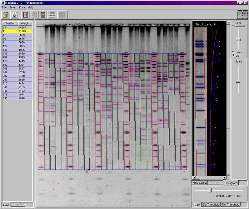 DNA Fingerprinting Mode