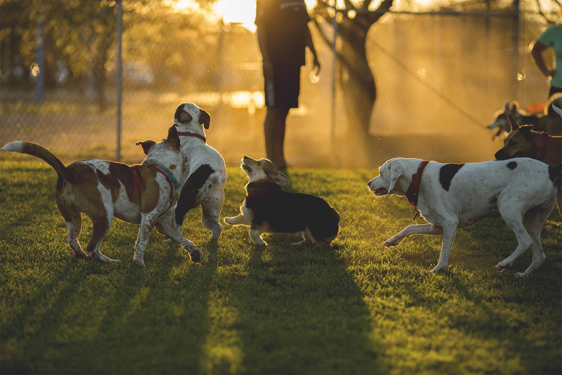 Dogpark_11.jpg