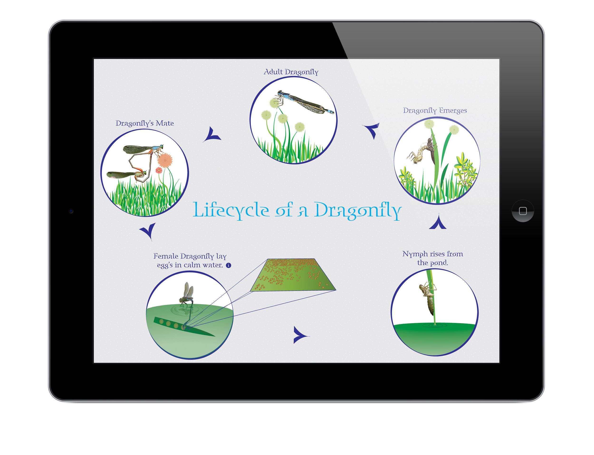 dragonfly 1.jpg