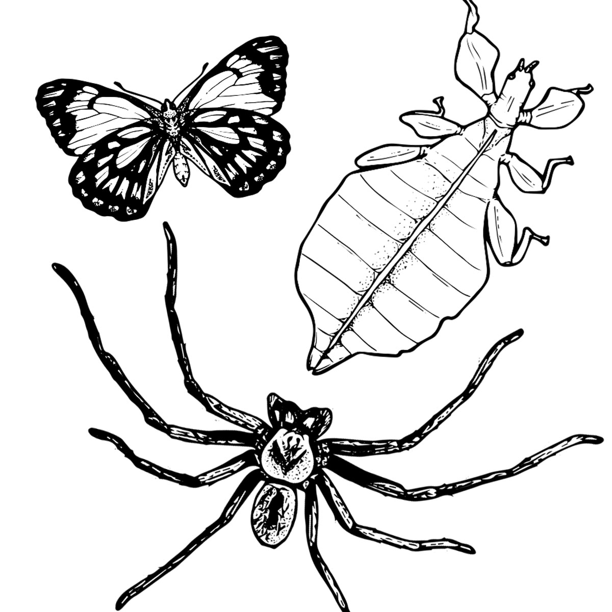 Caper White Butterfly, Leaf Insect, & Grey Huntsman Spider