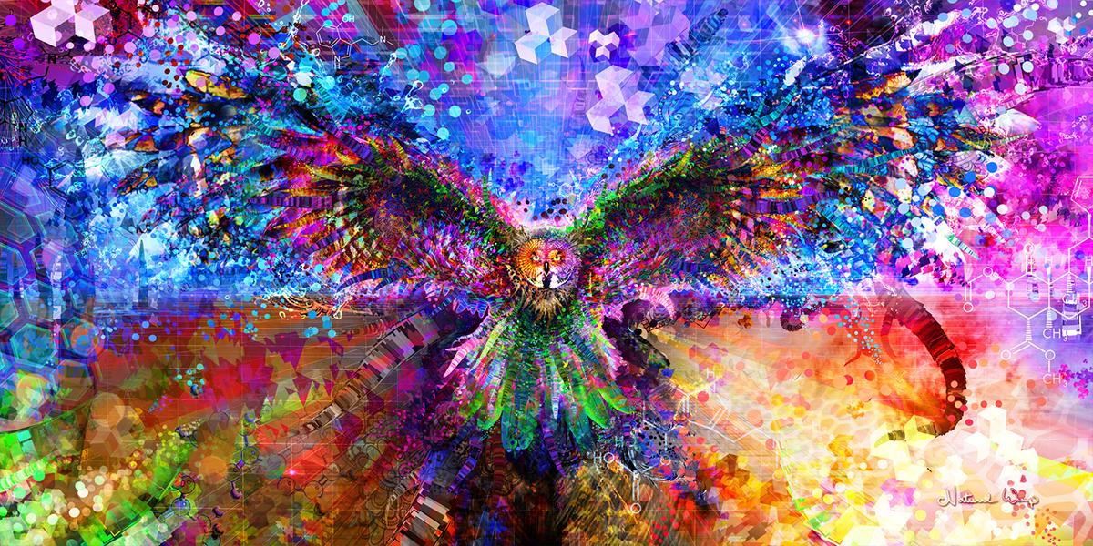 Natural Warp  :    Enter Your Mind