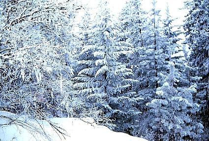 Bob Thomas winter1.jpg