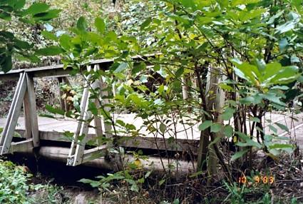 Main trail bridge NIM14.jpg