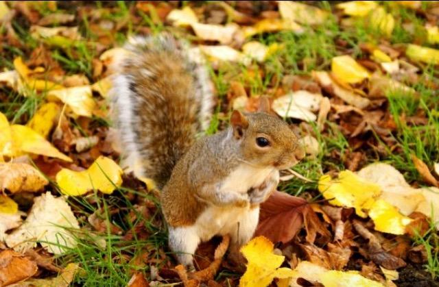 a fucking squirrel.jpeg
