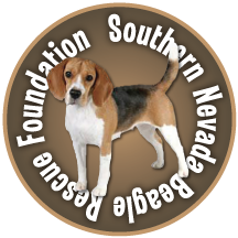 Southern Nevada Beagle Rescue