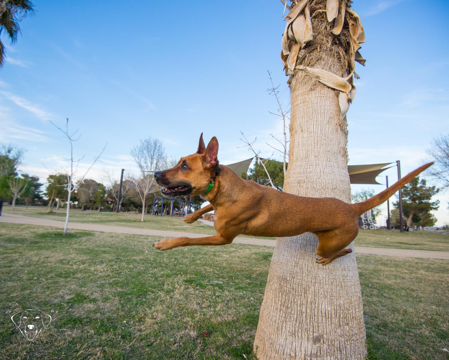 dog-trick-photo-bark-gallery