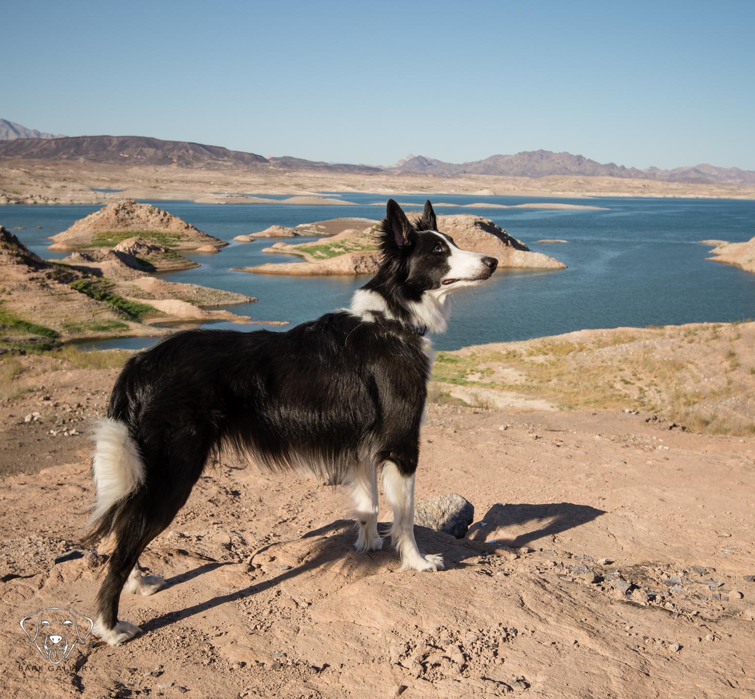 lake-outdoor-photo-portrait