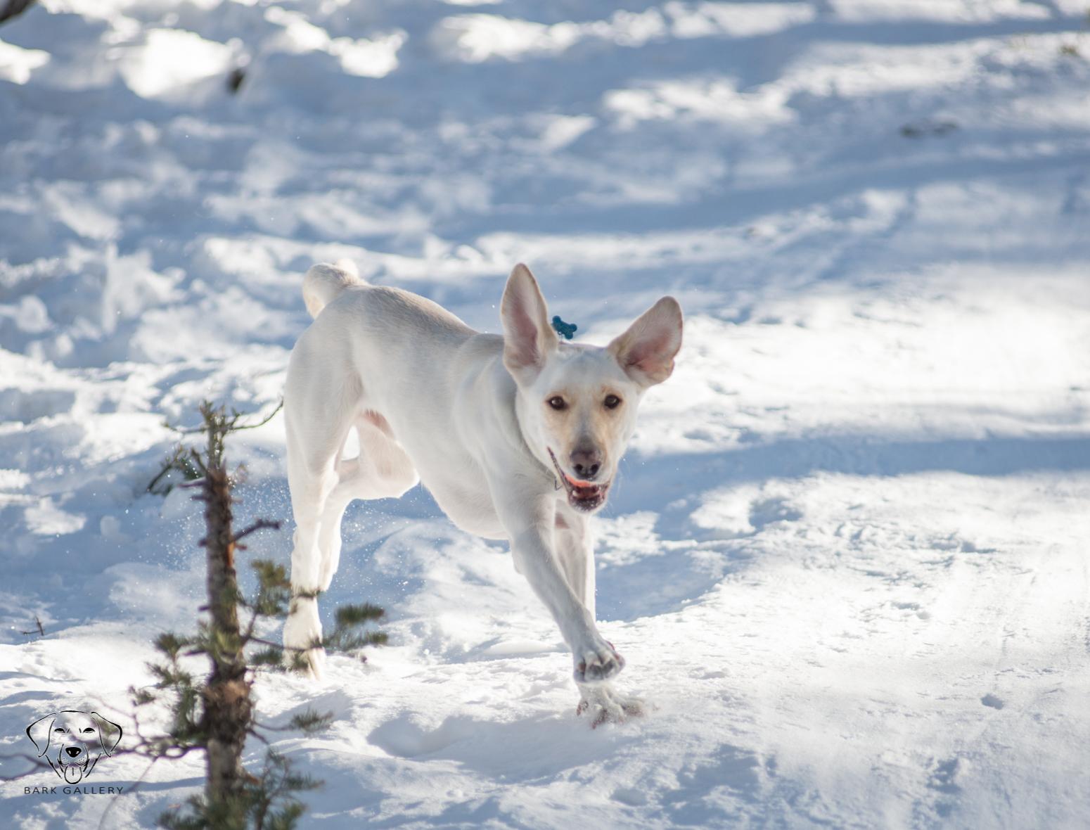 Bear, Bark Gallery Mascot- Snow Day