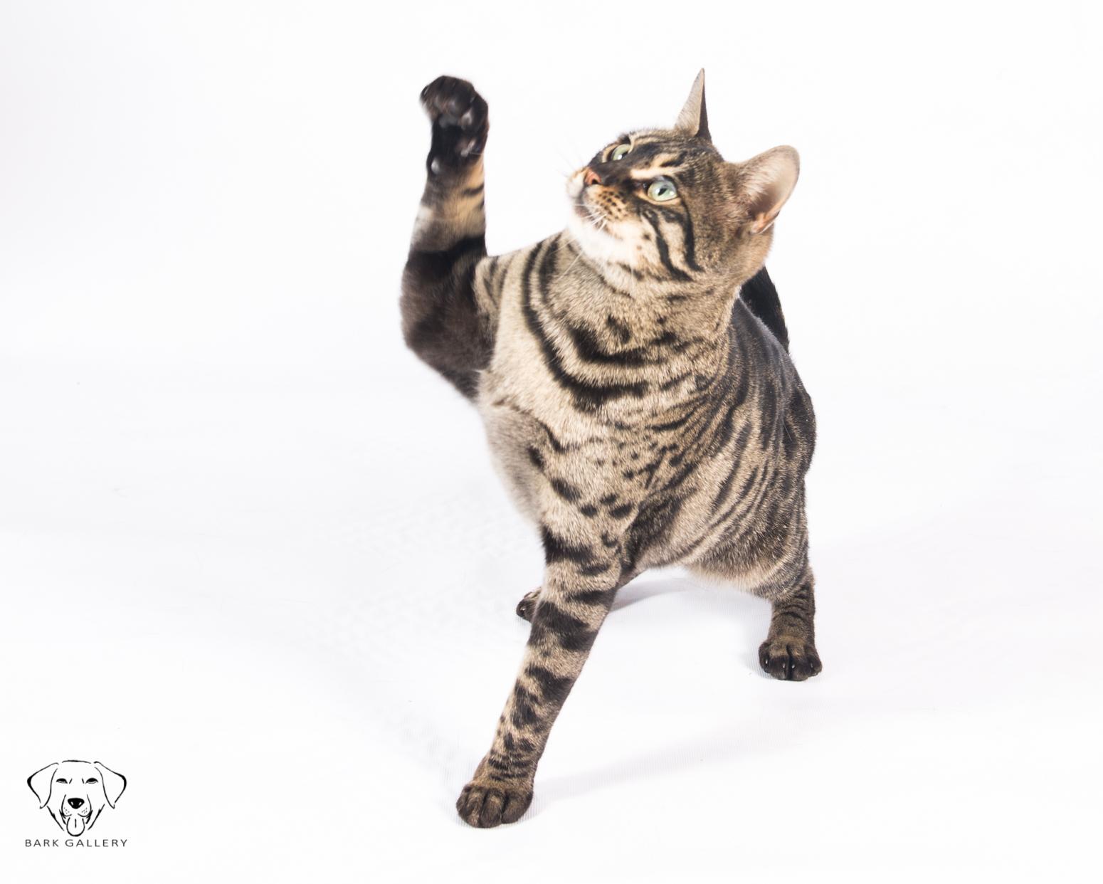 High Five Kitty!