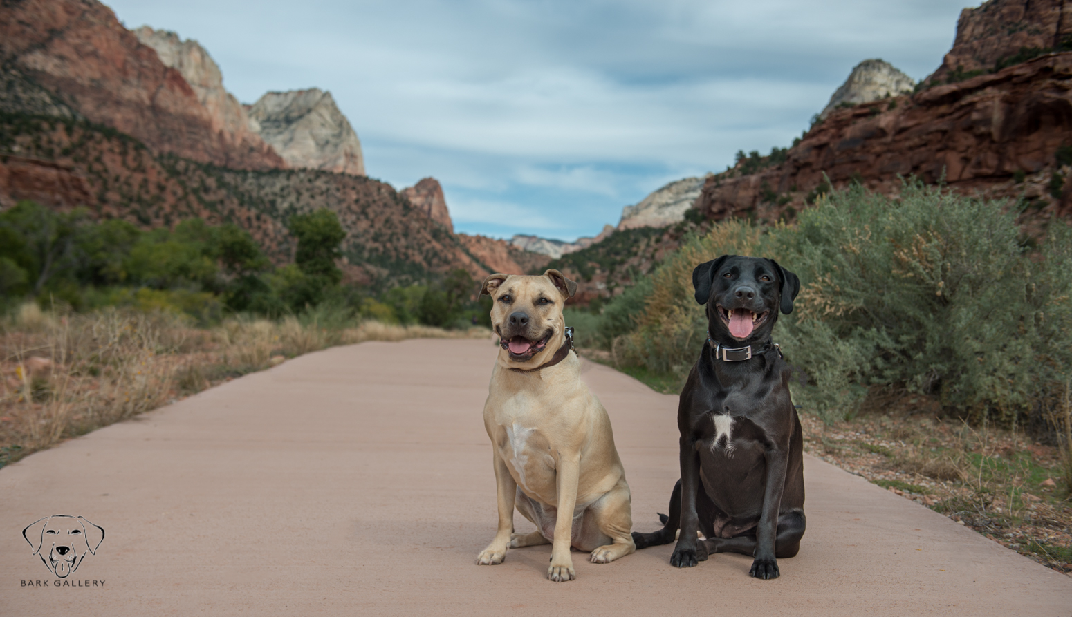 Jet and Bella- Bark Gallery Session