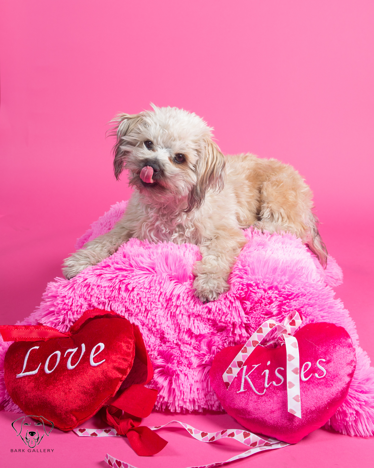 Bark Gallery Valentines Day Pet Photos