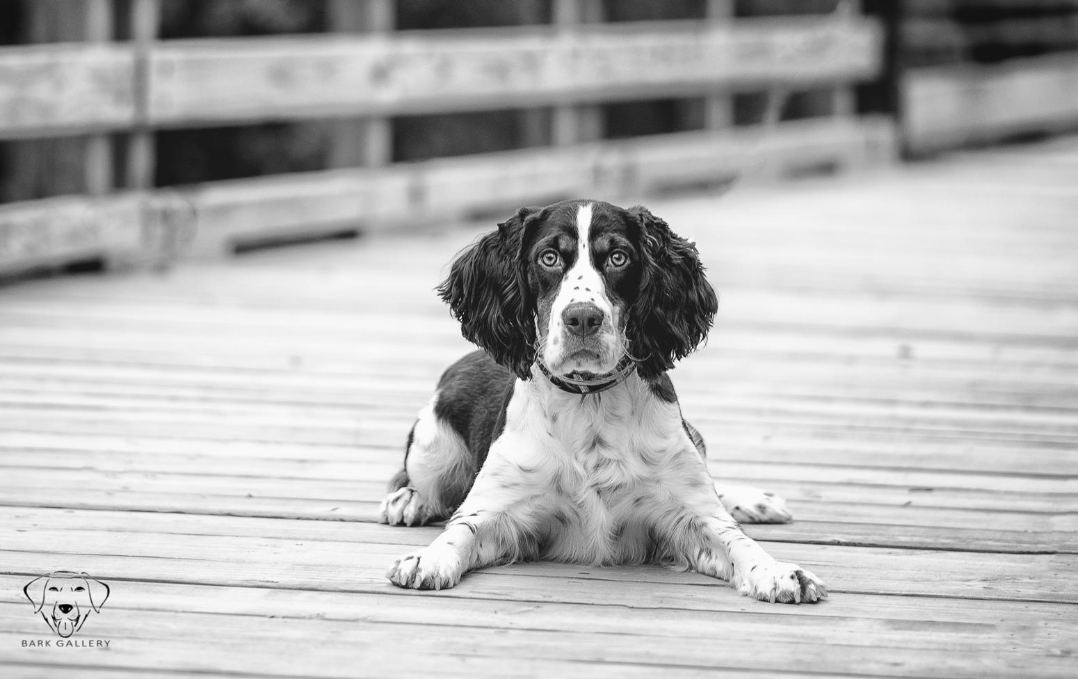 blackandwhite-pet-portrait