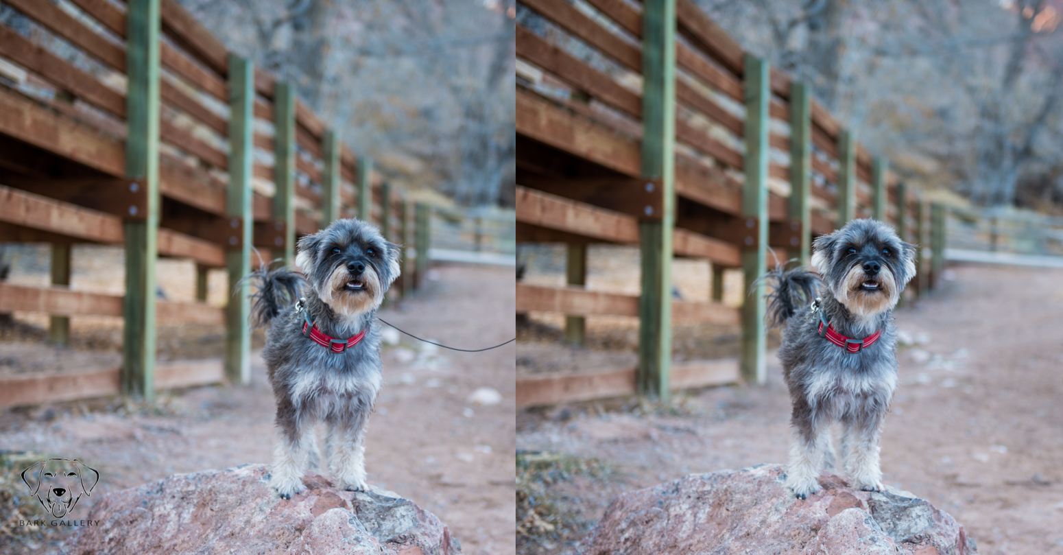 dog-photographer-leash-removal