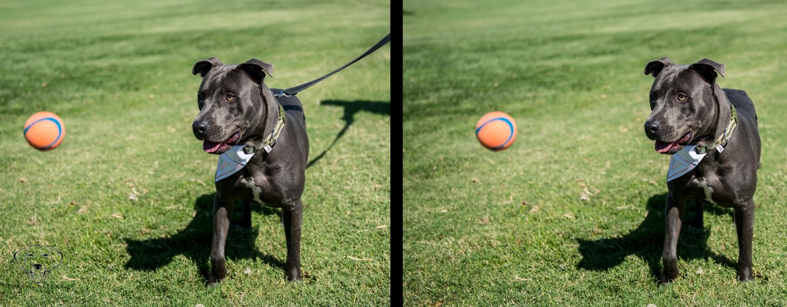 leash-removal-dog
